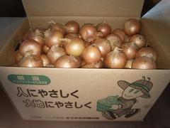 【農家直送】北海道産玉ねぎ お手ごろMサイズ20kg送料安
