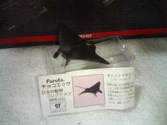 フルタ 日本の動物3 オニイトマキエイ ダイバーの憧れマンタ