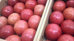 熊本産、八代新鮮トマト、家庭用、8�s入りです!