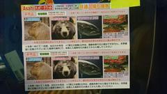上野動物園ペア