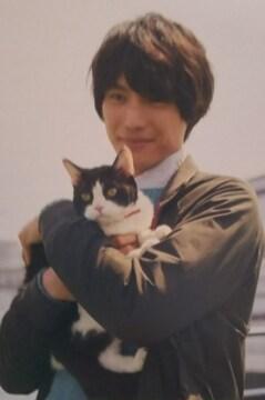 福士蒼汰(*^▽^*)旅猫リポート  ポストカード(葉書)6枚set