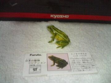 フルタ  日本の動物コレクション2        トノサマガエル