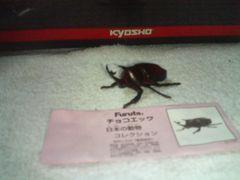 フルタ  日本の動物  クラシック      昆虫の王様  カブトムシ