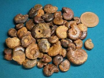 ヘマタイト化アンモナイトの化石☆1〜2.5cm程 100g