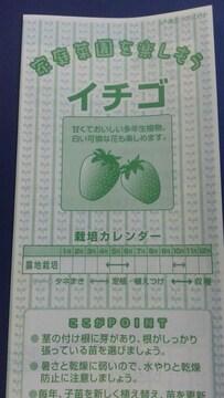 家庭菜園、いちご栽培方法冊子 イチゴ